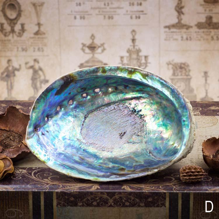Large Abalone Shell